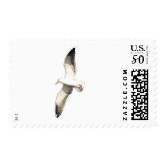 Helaine's Soaring Seagull Postage