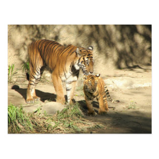 Helaine's Tiger and Cub Postcard