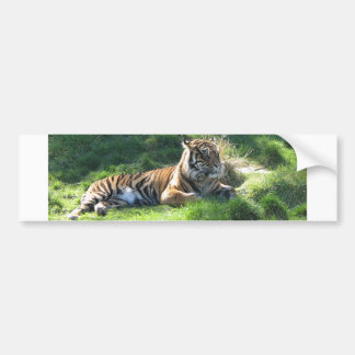 Helaine's Tiger Bumper Sticker