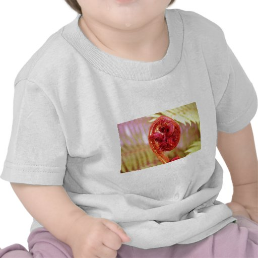 Helecho Camisetas