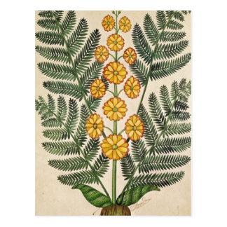 Helecho con las flores amarillas tarjeta postal
