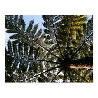 Helecho de árbol de Nueva Zelanda Tarjeta Postal