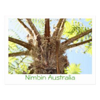 Helecho de árbol tarjetas postales