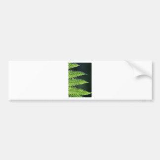 Helecho de árbol verde etiqueta de parachoque