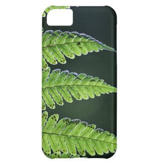 Helecho de árbol verde funda iPhone 5C