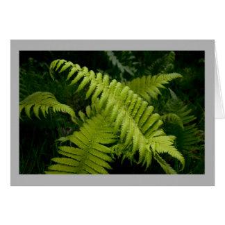 Helecho de madera de la primavera suave en bosque tarjeta de felicitación
