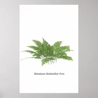 Helecho de Maidenhair Himalayan Posters