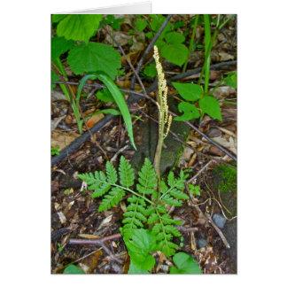 Helecho de serpiente de cascabel fructífero (virgi tarjeta pequeña