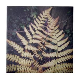Helecho del otoño de la teja del follaje