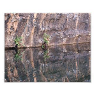Helecho solitario por el agujero de agua del fotografías
