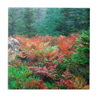 Helechos coloridos del bosque en el Acadia Maine d Azulejo Ceramica