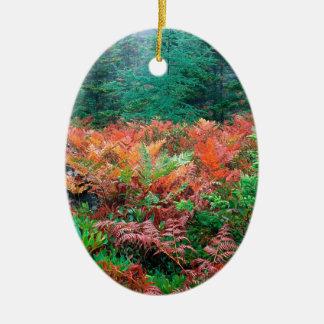Helechos coloridos del bosque en el Acadia Maine d Adornos