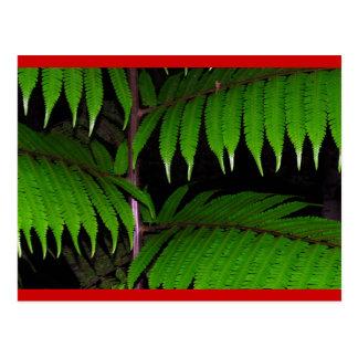 Helechos de la selva tropical postal
