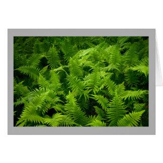 Helechos de madera verdes suaves del tiempo de tarjeta de felicitación