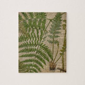 helechos decorativos del periódico botánico del rompecabezas