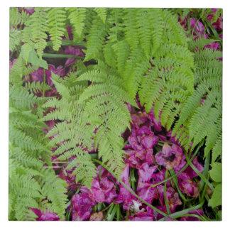 Helechos del bosque con los pétalos rosados de la  azulejo cuadrado grande