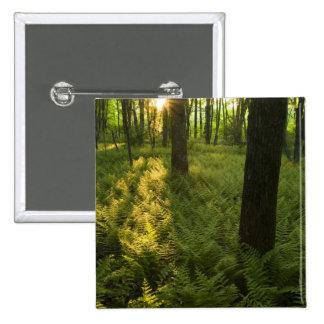 Helechos en el bosque en Grafton, Massachusetts Pin