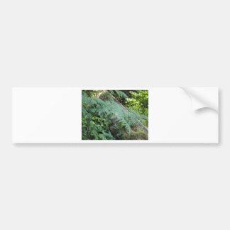 Helechos en el bosque pegatina de parachoque