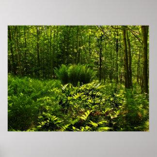 Helechos salvajes del bosque póster