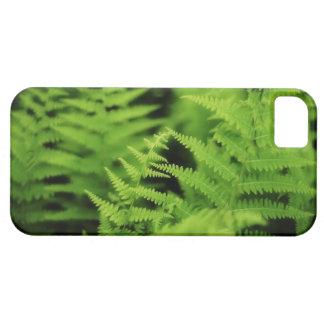 Helechos verdes enormes funda para iPhone SE/5/5s