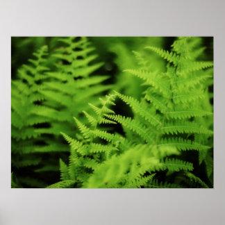 Helechos verdes enormes impresiones
