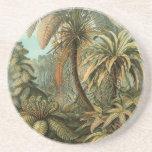 Helechos y palmera del vintage botánicos posavasos para bebidas