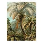 Helechos y palmera del vintage botánicos postales