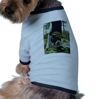 Helechos y tocón de árbol camisas de mascota
