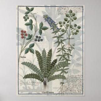 Helechos, zarzas y flores poster