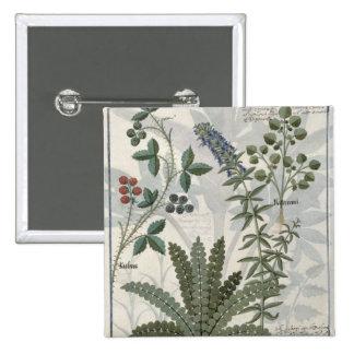 Helechos, zarzas y flores pin