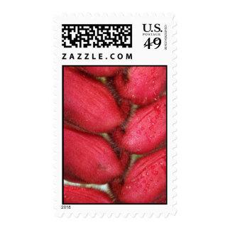 Heleconia borroso rojo detalle