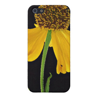 Helenium, Bressingham's Gold flowers iPhone 5 Covers