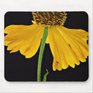 Helenium, Bressingham's Gold  flowers Mouse Pads