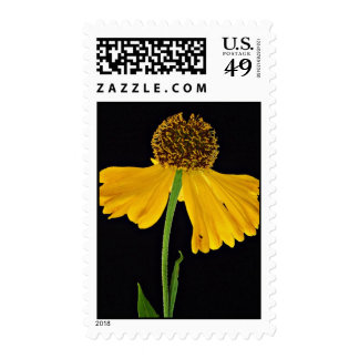 Helenium, Bressingham's Gold  flowers Postage Stamps