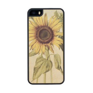 Helianthus Annuus from 'Velins du Roi Vol.36' Carved® Maple iPhone 5 Slim Case