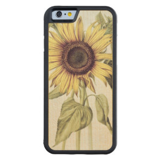 Helianthus Annuus from 'Velins du Roi Vol.36' Carved® Maple iPhone 6 Bumper