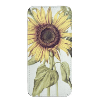 Helianthus Annuus from 'Velins du Roi Vol.36' iPhone 5 Pouch
