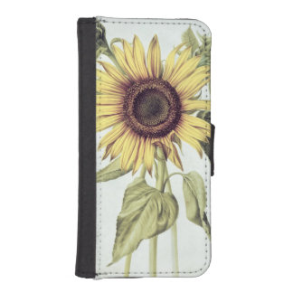Helianthus Annuus from 'Velins du Roi Vol.36' iPhone 5 Wallet