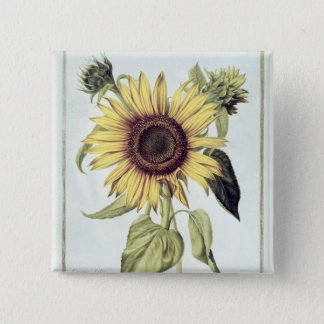 Helianthus Annuus from 'Velins du Roi Vol.36' Pinback Button