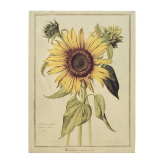 Helianthus Annuus from 'Velins du Roi Vol.36' Wood Print
