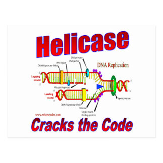 Helicase Cracks the Code Postcard