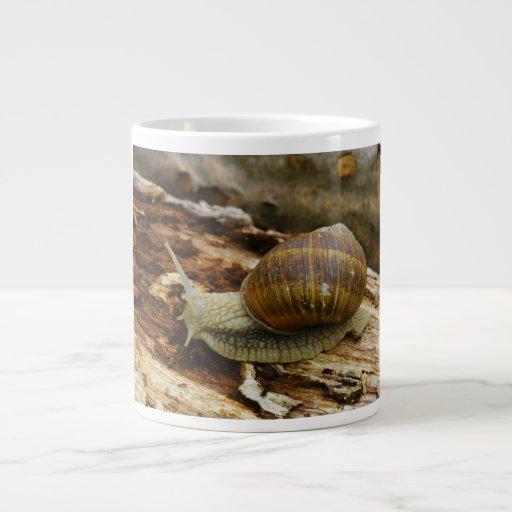 Hélice romana Pomatia del caracol comestible de Bo Taza Jumbo