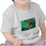 helicon de oro de las mariposas camiseta