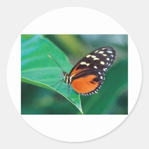 helicon de oro de las mariposas pegatina redonda