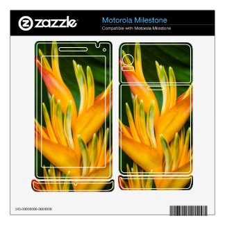 Heliconia Bird of Paradise Flower Photography Motorola Milestone Decals