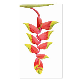 Heliconia Branch Profile Card Double-Sided Standard Business Cards (Pack Of 100)