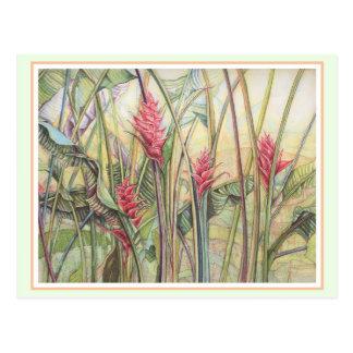 Heliconia Bush Postcard