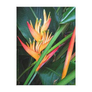 Heliconia Canvas Print