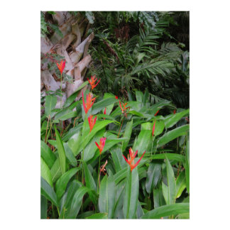 Heliconia Garden Poster