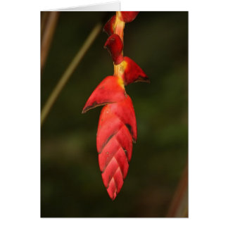 Heliconia Greeting Cards